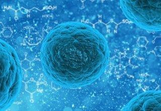 Nipah Virüsü Nedir? Uzmanlar Uyardı: Dünyada Nipah Virüsü Patlayabilir!